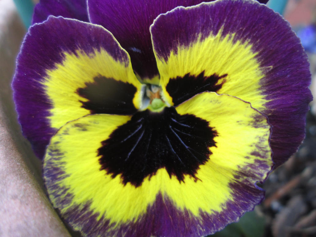 Purple and yellow flower by kovaccarter on deviantART