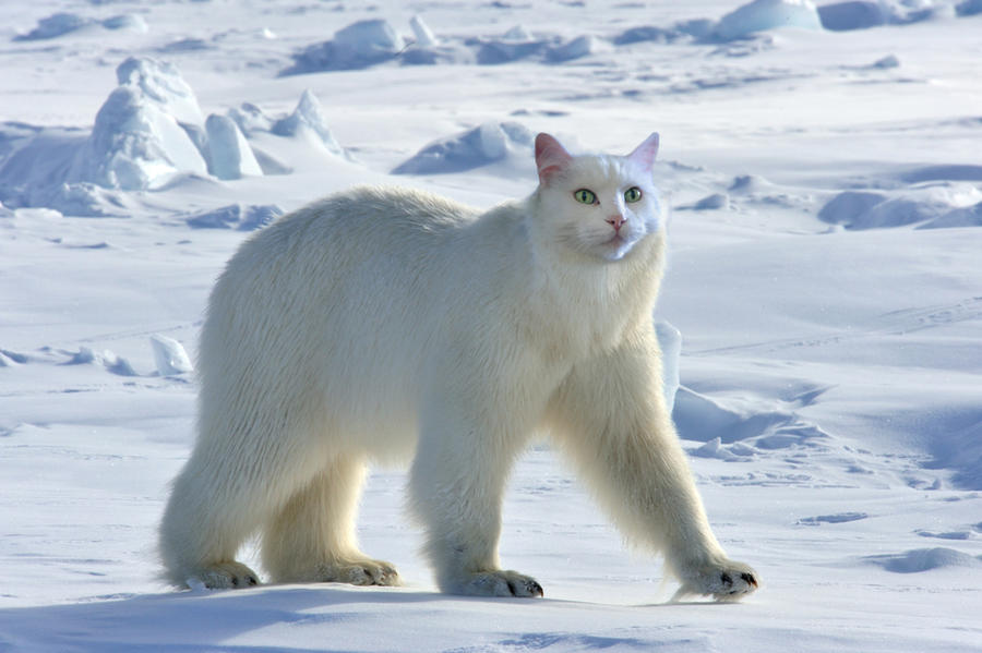 Images Of Big House Cats