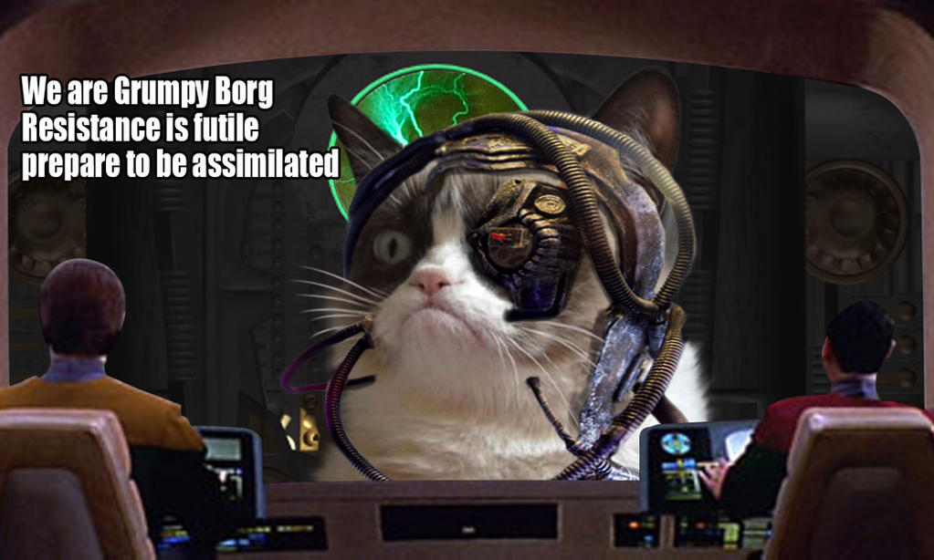 Grumpy Borg Cat by CaptainScratch