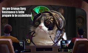 Grumpy Borg Cat