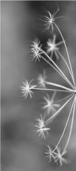 Snowflake by Antinomi