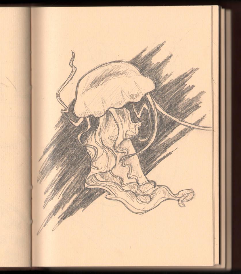 jellyfish sketch by uzushio