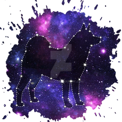 akita constelation