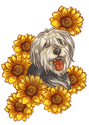 sunflower dog