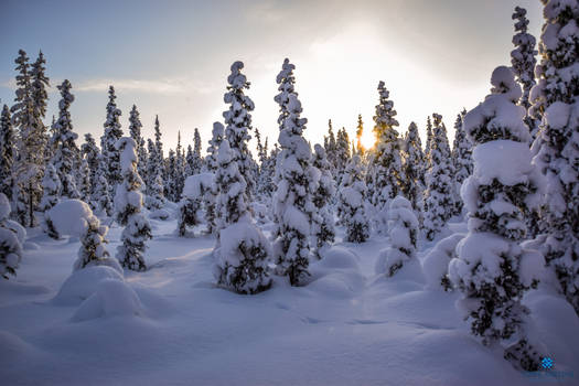 Project 365 - #166 - Throwback to magical Lapland