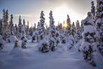 Project 365 - #166 - Throwback to magical Lapland by Kiotho