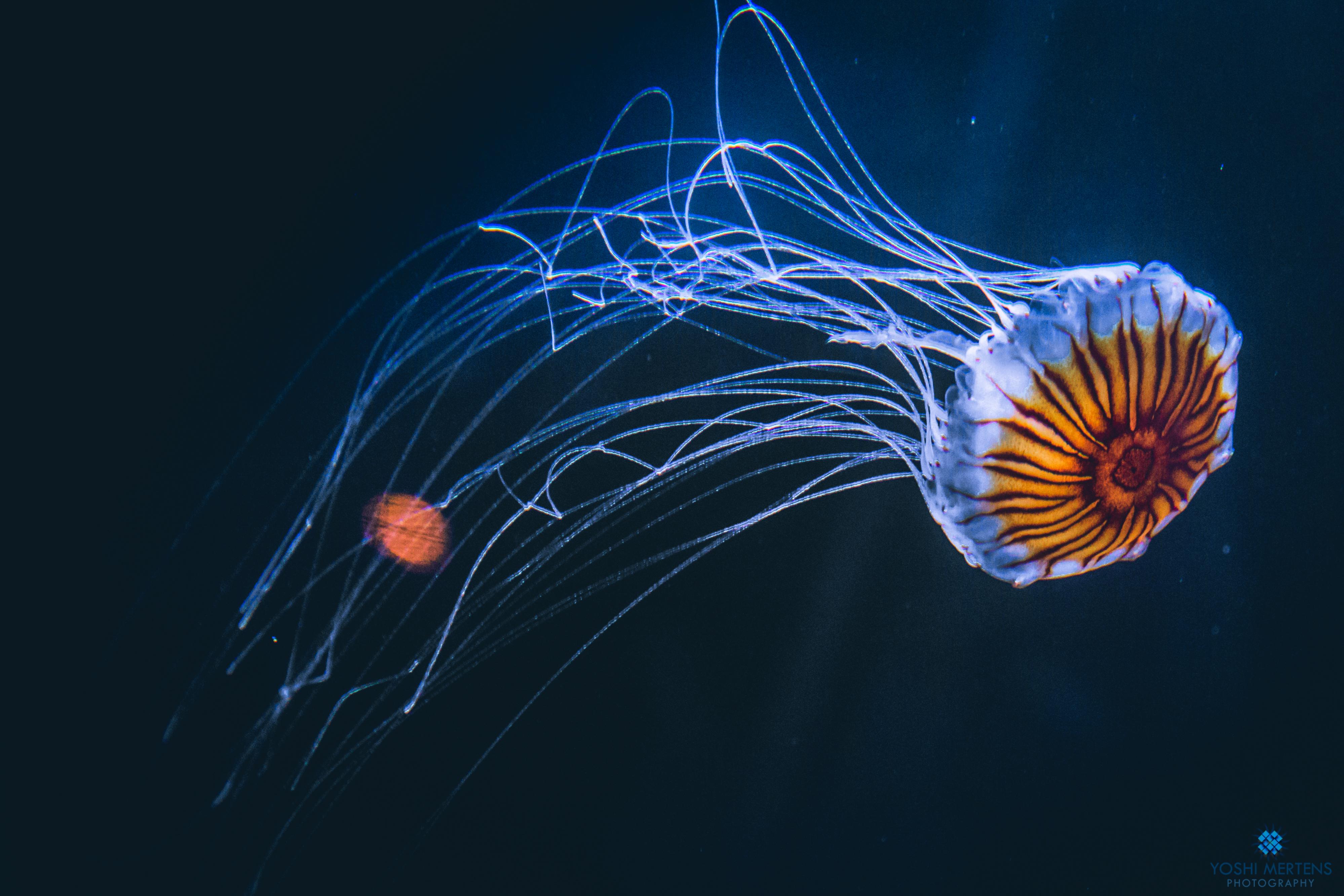 The amazing underwater world! by Kiotho on DeviantArt