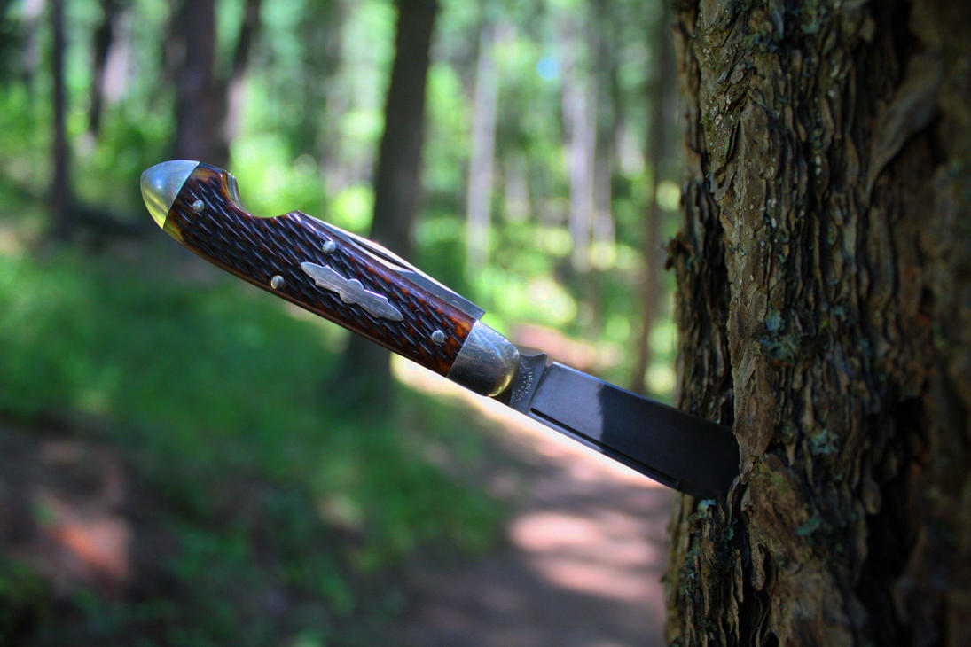 sharp_bark_on_the_trail_by_wolfie_83-d7pujtc.jpg