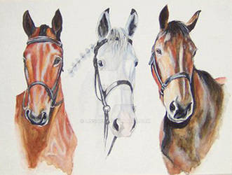 portrait three horses