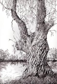 White Willow Gingamegsart
