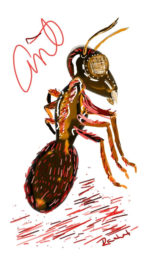 Ant by Rachel1972