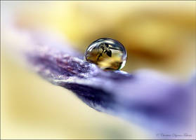 love drop by dini25