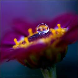 colourful flower drop