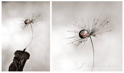 Baby droplets by dini25