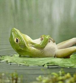 Rockinfroggi's Profile Picture