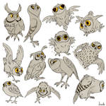 MANY OWLS HANDLE IT