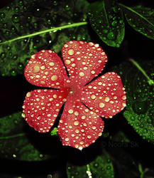 ... Rain Drops ...