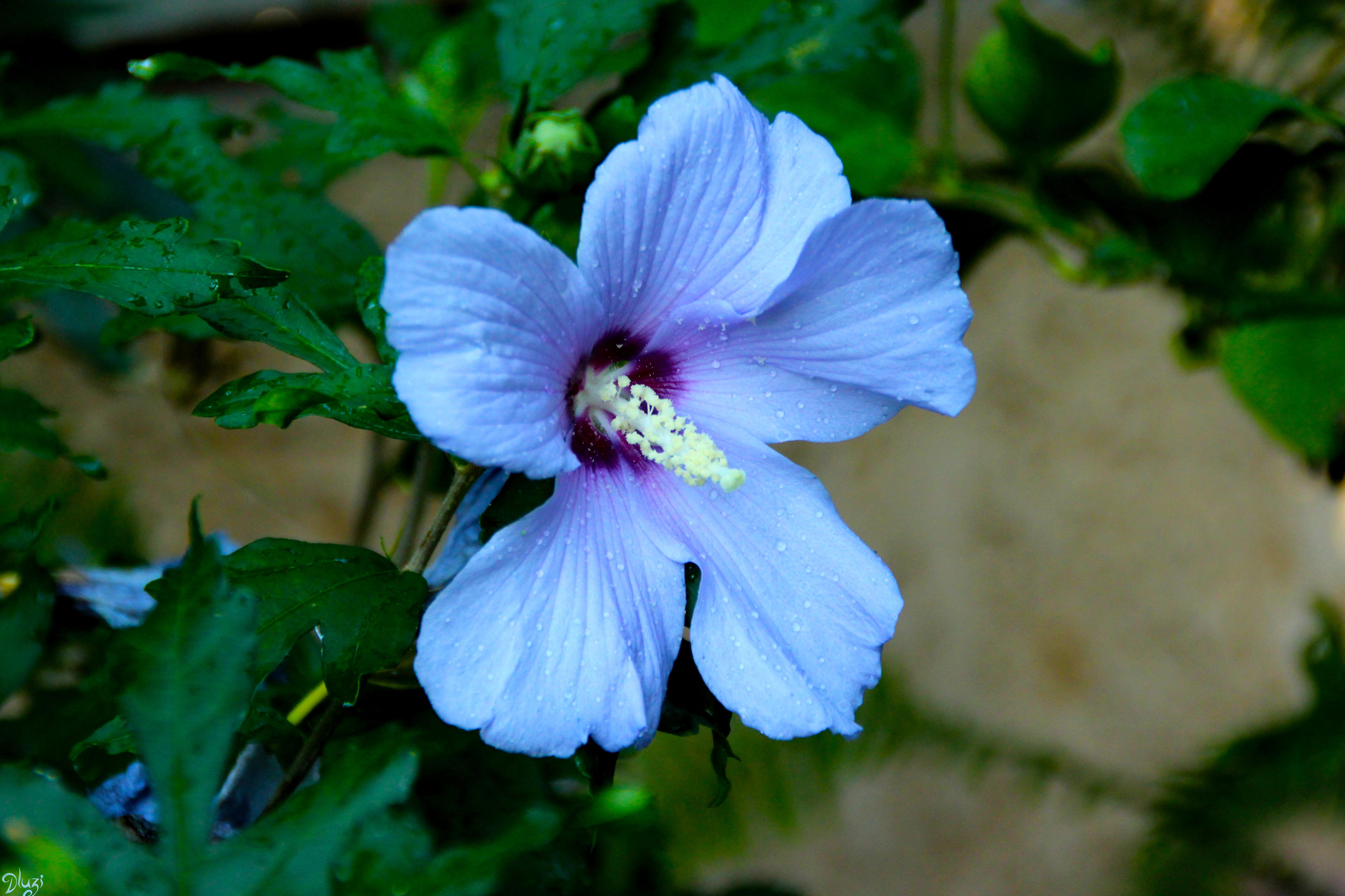 El lenguaje de las flores vanessa diffenbaugh