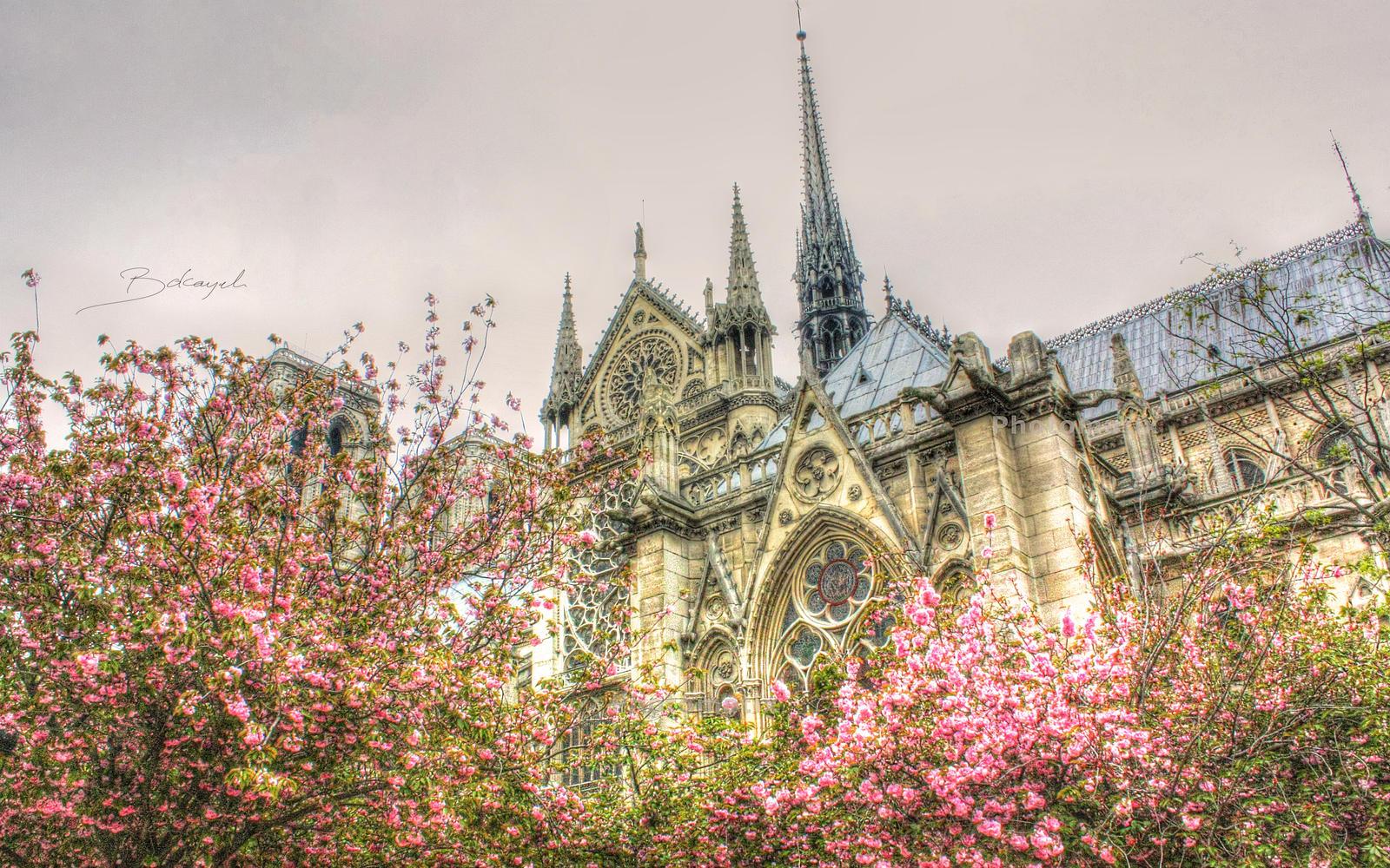 Notre Dame de Paris by bokayeh