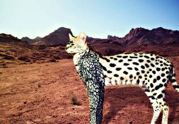 White Serval