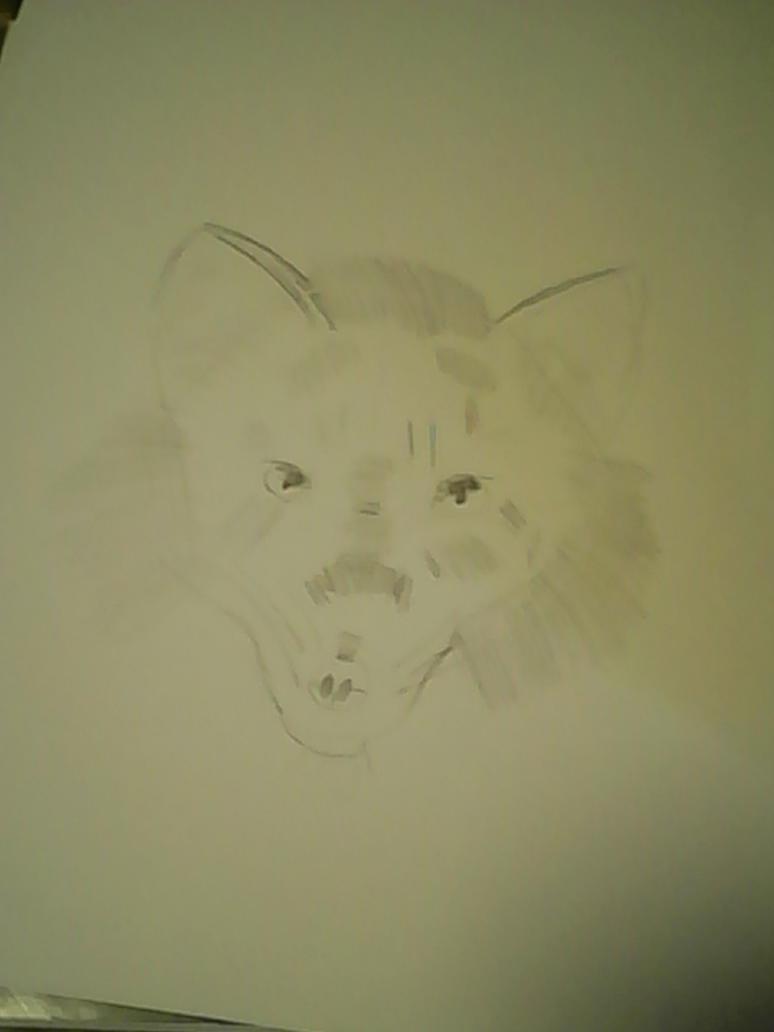 fox sketch by Canadafan98255