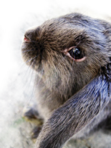rabbit by gekata