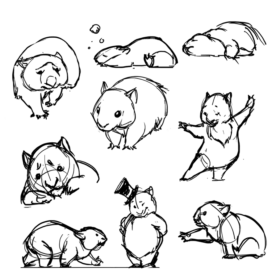 Wombat Drawing WOMBATS by ancalinar o...