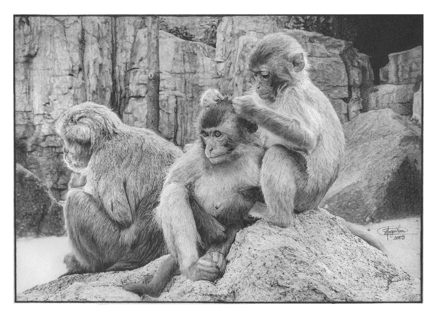 'Primatas' Graphite Drawing