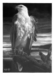 'Freedom!' Graphite Drawing