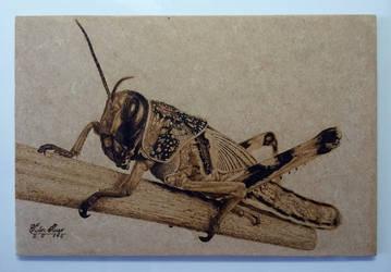 'Grasshopper' Pyrography by pesterhugo