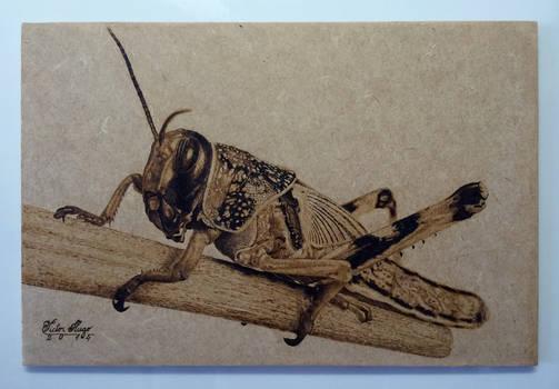 'Grasshopper' Pyrography