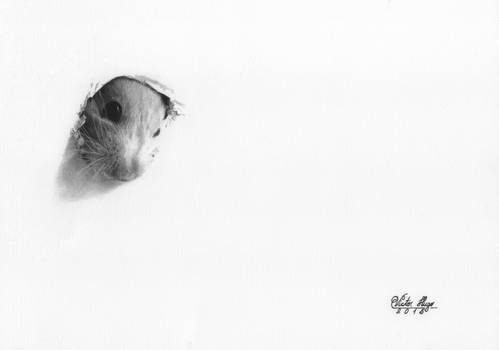 'Hamster' Graphite Drawing