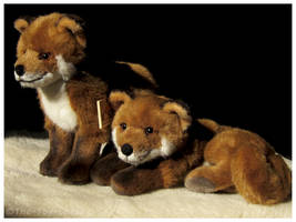 Kosen Red Fox Kit Pair by The-Toy-Chest
