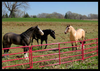 Breyer - Lazy Days In The Paddock by The-Toy-Chest