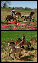 Breyer - Willful by The-Toy-Chest