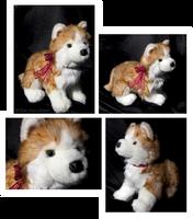 Douglas Medium Floppy Dogs - Rubin Russet Husky by The-Toy-Chest