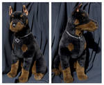 Douglas Cuddle Toys - Apollo Doberman