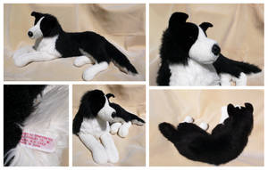 Douglas Cuddle Toys - SmartPractice Border Collie by The-Toy-Chest