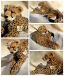 Kosen Cheetah - 'Juba'