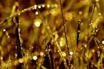 autumn dew by cityofwonder