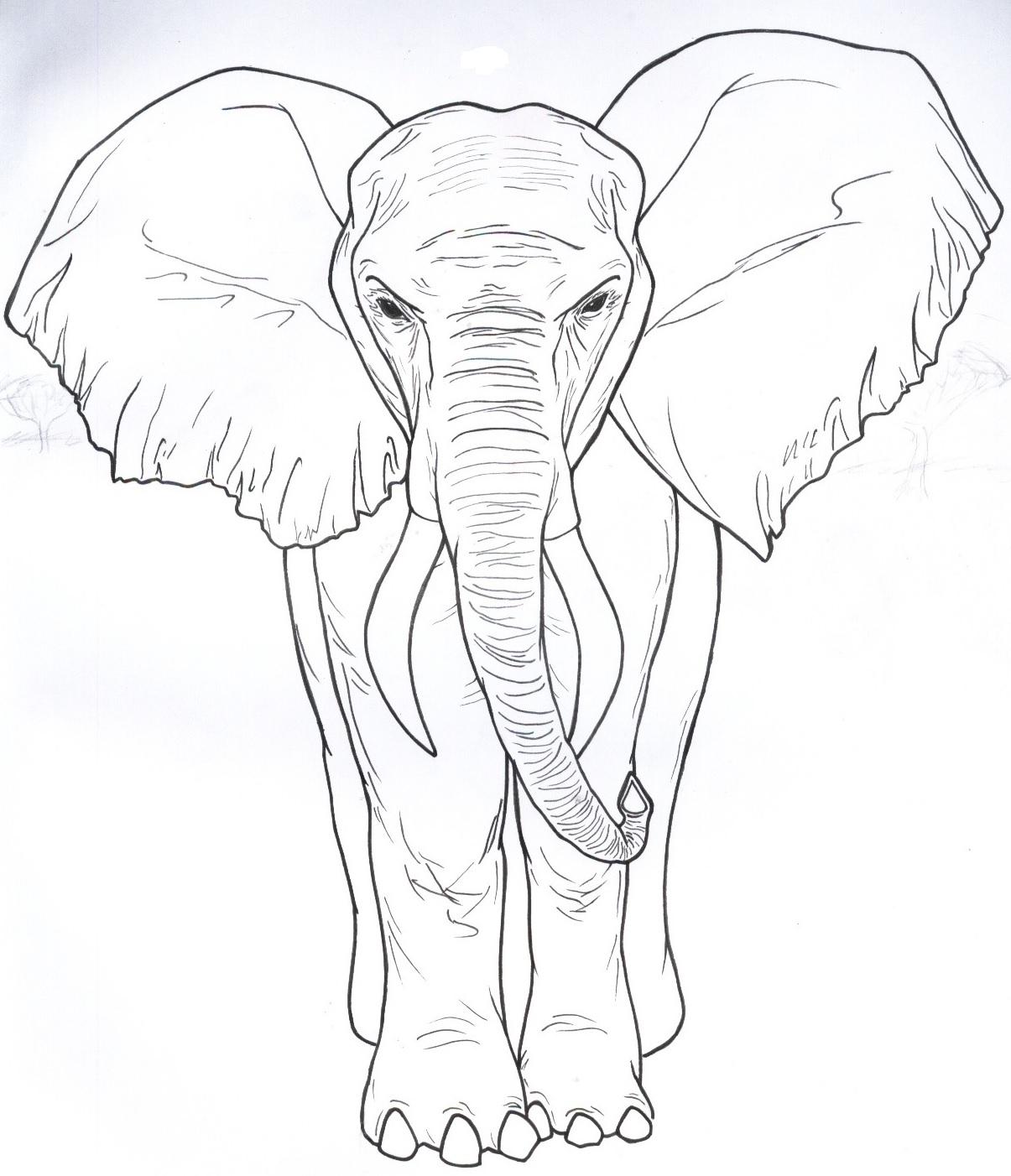 Hermosa Cuadro De Elefante Para Colorear Ilustración - Enmarcado ...