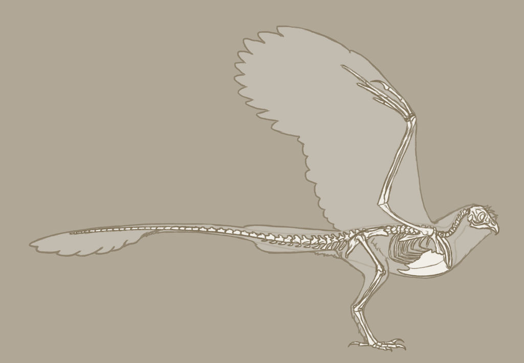 Tyto Stryx Skeleton by Cogaidh