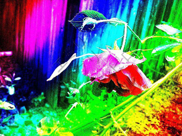 Rainbow Mystic Flower by RockinPyroGal