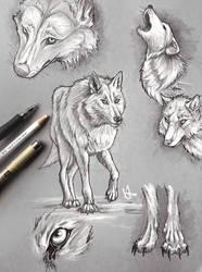 Direwolf sketches