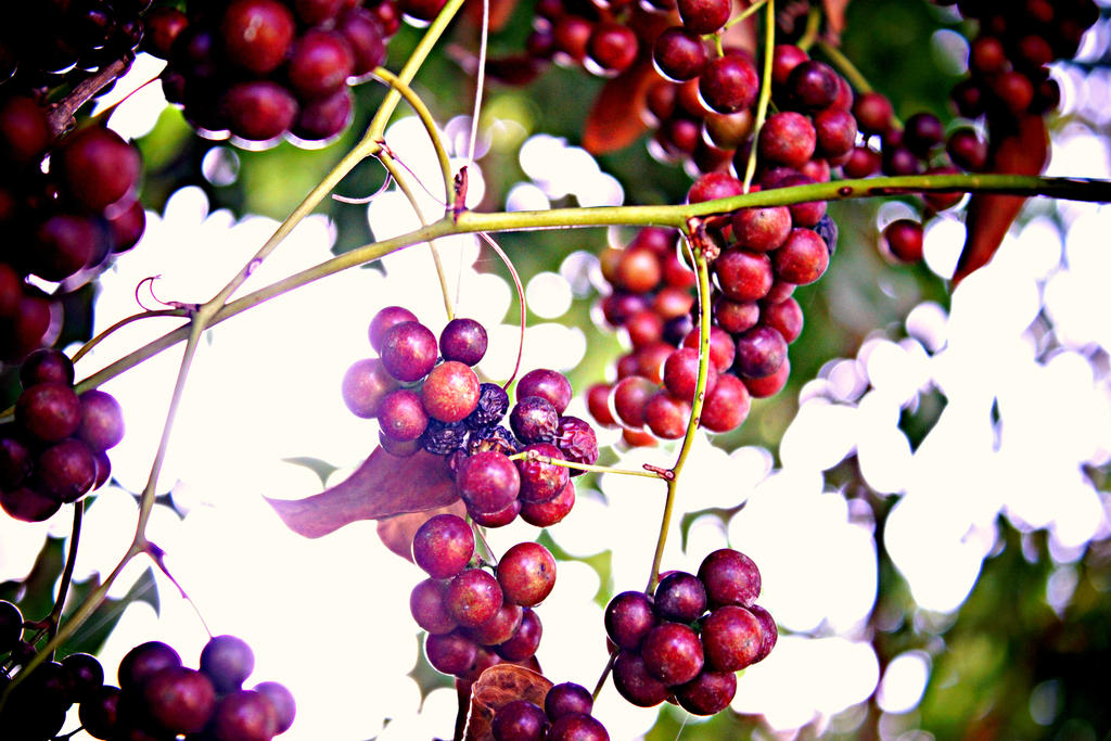 Berries of Life by Beauty-in-a-Picture