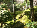 mossy slope