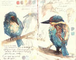 Kingfisher sketches