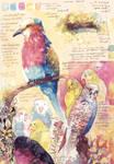 Bird studies #2