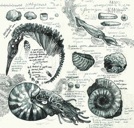 Sketchbook - Fossils #1 by PaperandDust