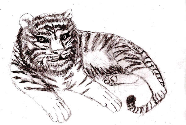 tiger cub sketch by Rhahsid